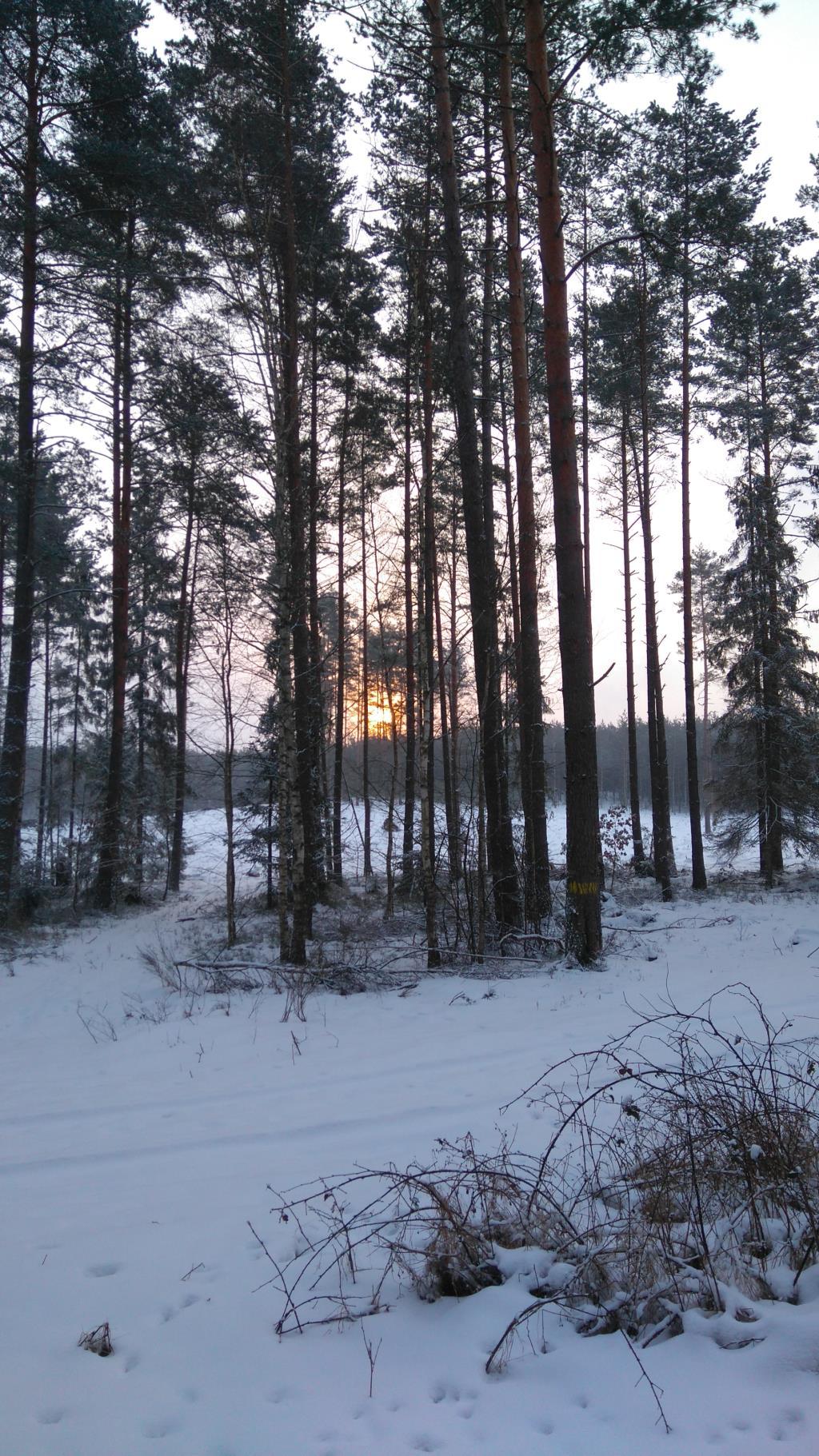Зимнее утро. Лесной пейзаж