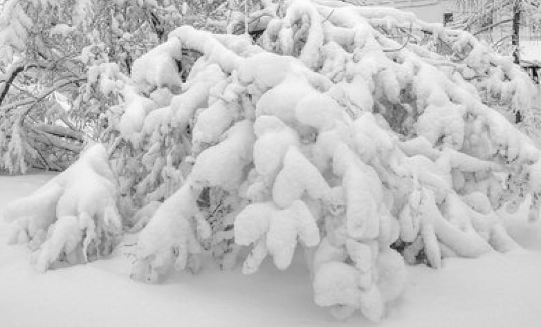 зимняя сказка. Блиц: снежная зима