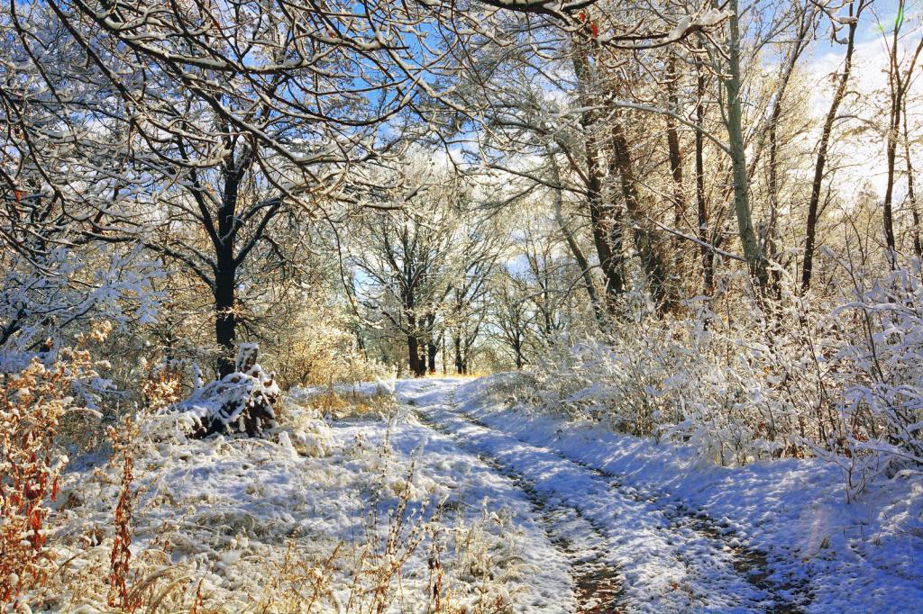 Волшебство первого снега.. Блиц: снежная зима
