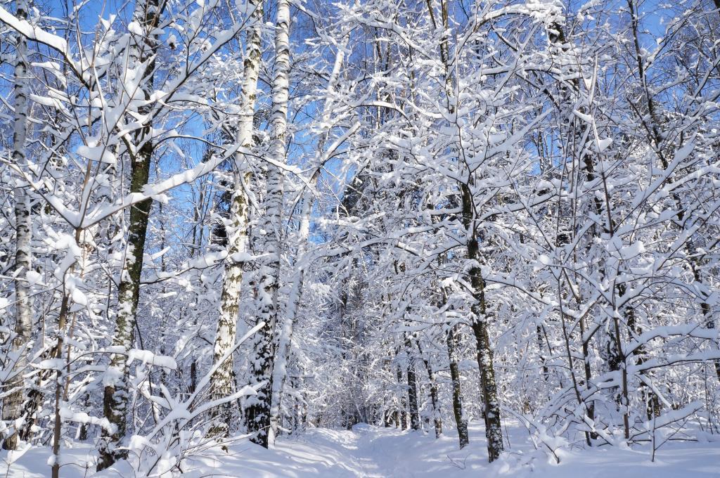Сказочная зима. Блиц: снежная зима