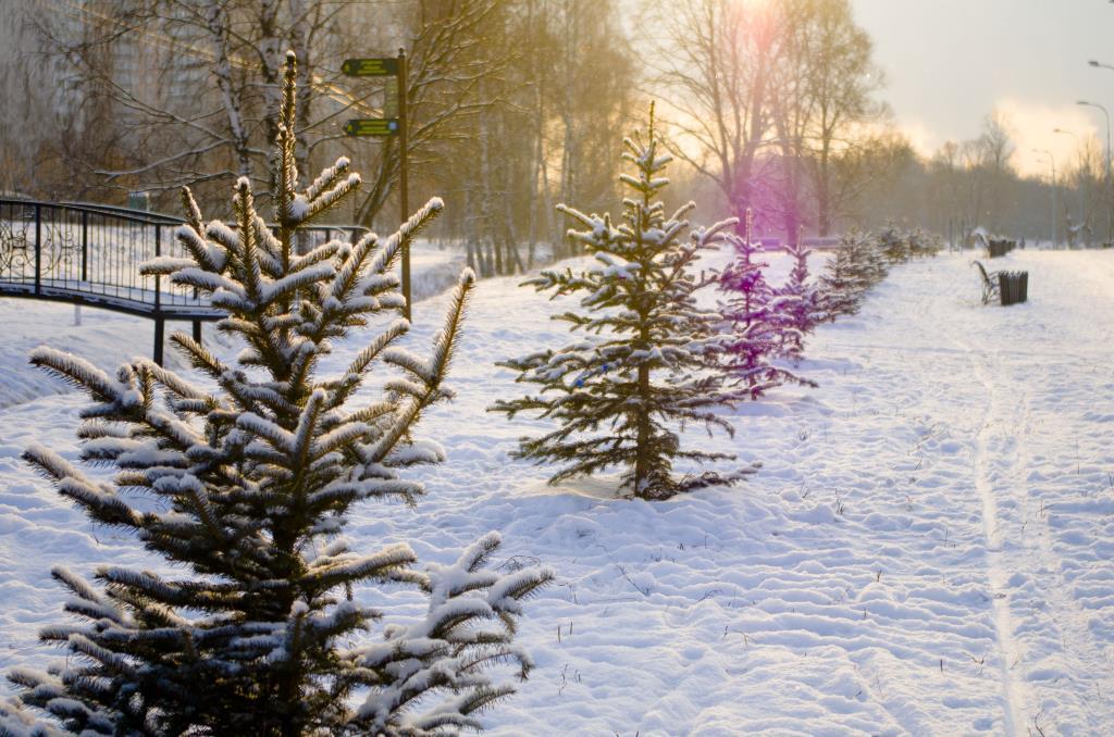 Зимнее солнце в зените. Блиц: снежная зима