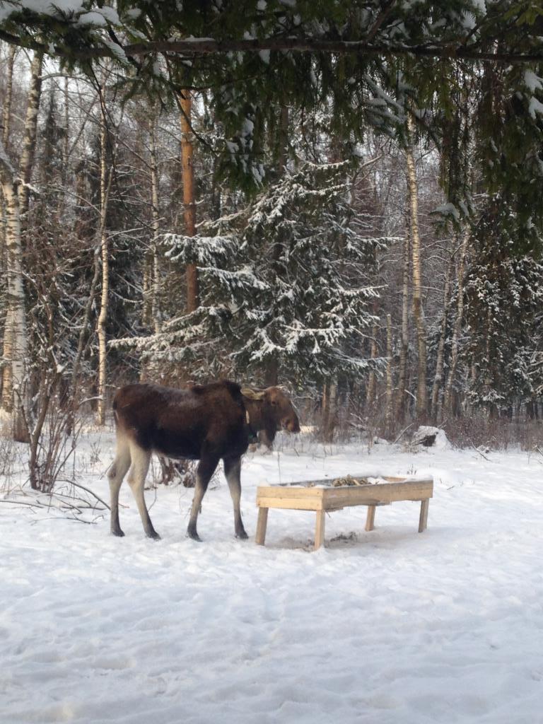 В сказочном Костромском лесу. Блиц: снежная зима