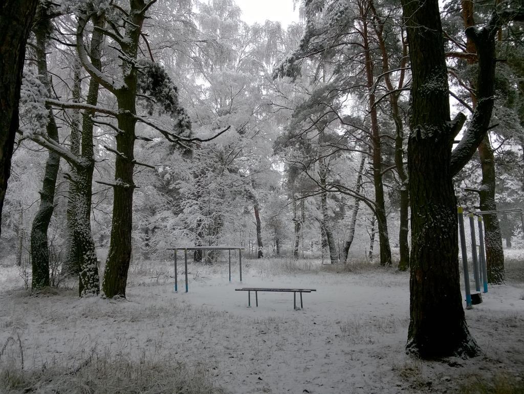 лес спит. Блиц: снежная зима