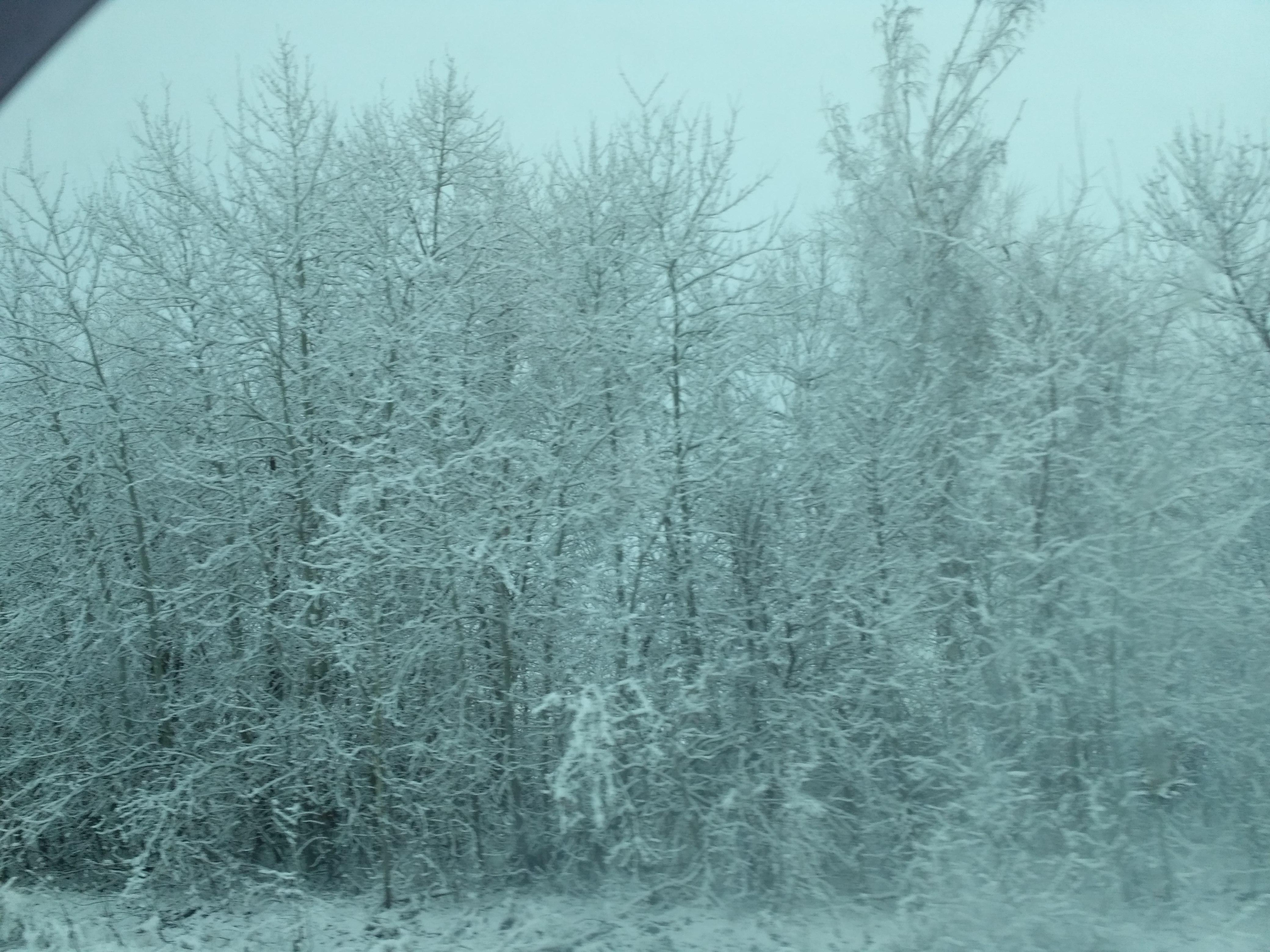 ? ?????? ??? ??????? ? ???????.. Блиц: снежная зима