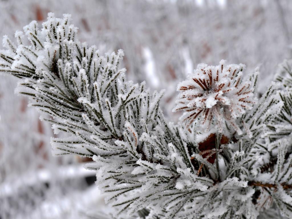 Зимний ЦВЕТОК..... Блиц: снежная зима