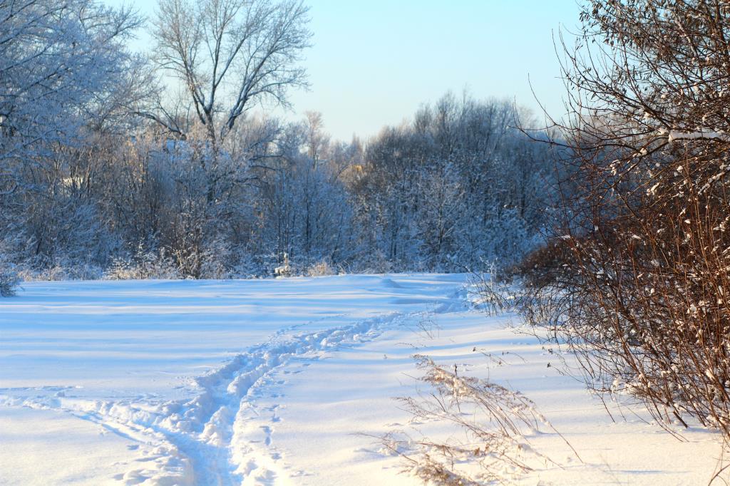 Заснеженная тропинка!. Блиц: снежная зима