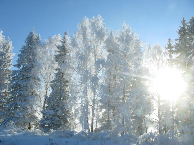 Зима за городом. Блиц: снежная зима