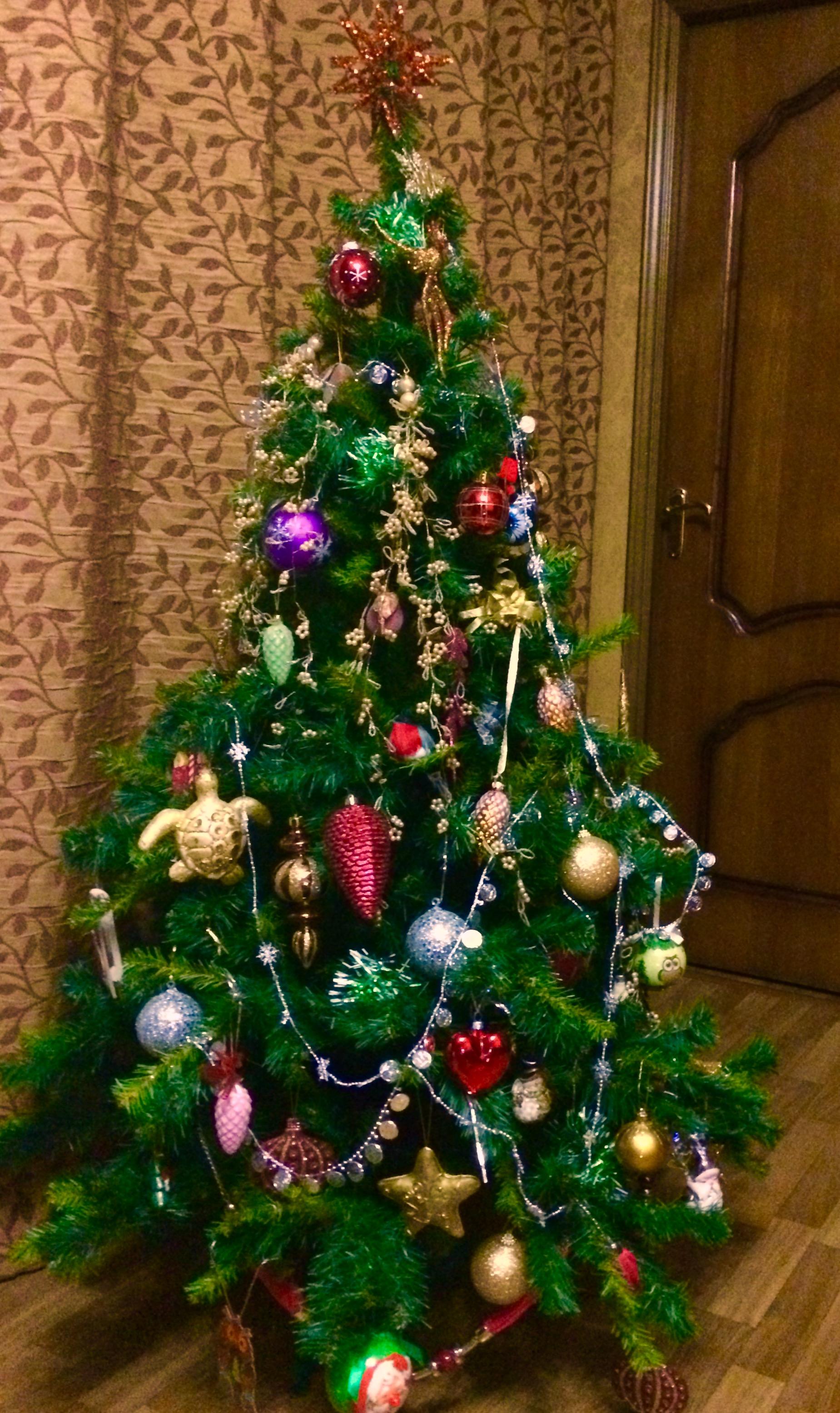 Елка. Блиц: новогодняя елка