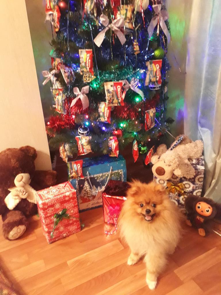 Наша красивица ёлочка с Баксом. Блиц: новогодняя елка