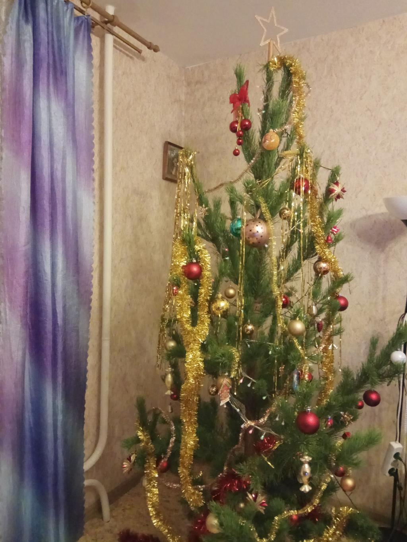 Наша семейная Ёлочка, она принесет всем удачу!. Блиц: новогодняя елка