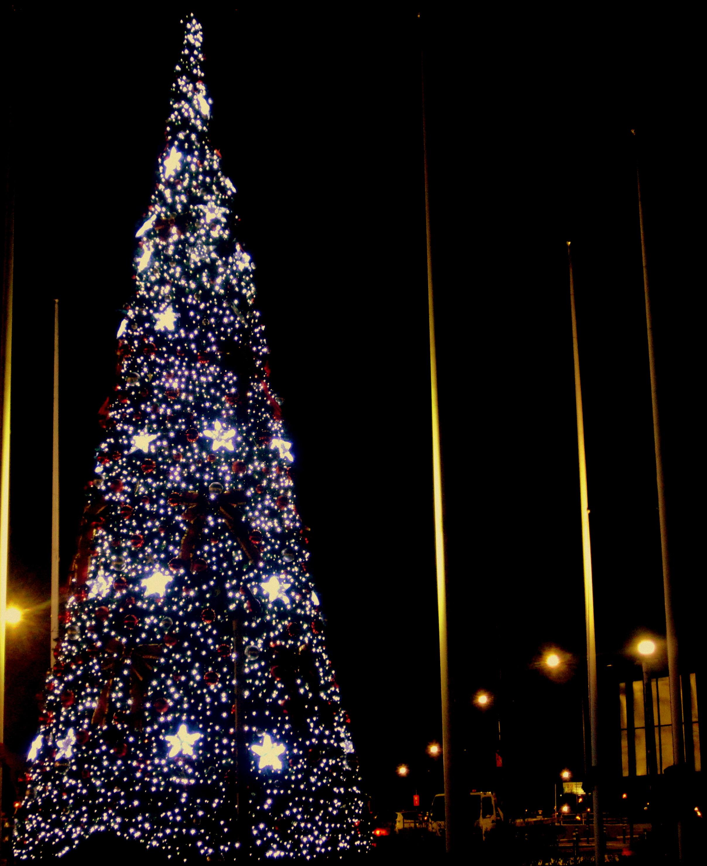 Новогодняя красавица ночью!. Блиц: новогодняя елка