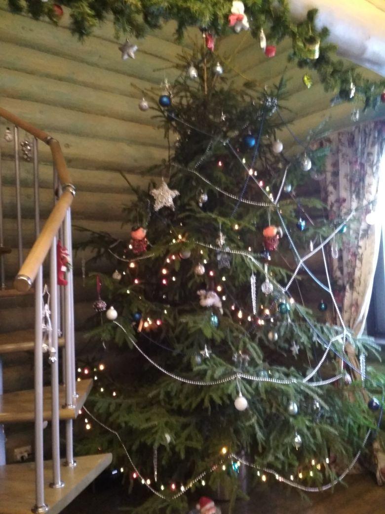 Любимое место семьи и кошек). Блиц: новогодняя елка