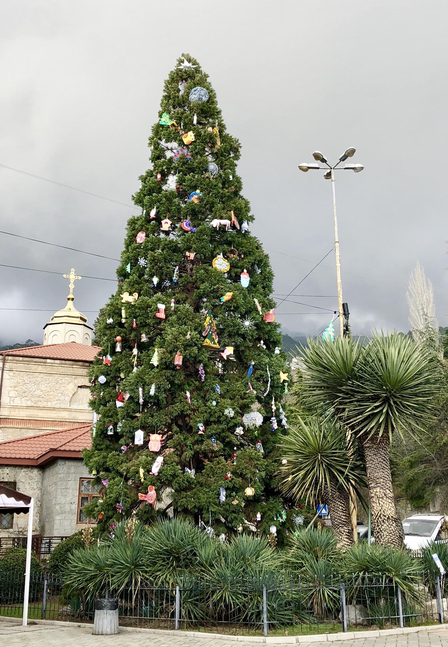 Никитский ботанический сад, Ялта 06.01.2018. Блиц: новогодняя елка