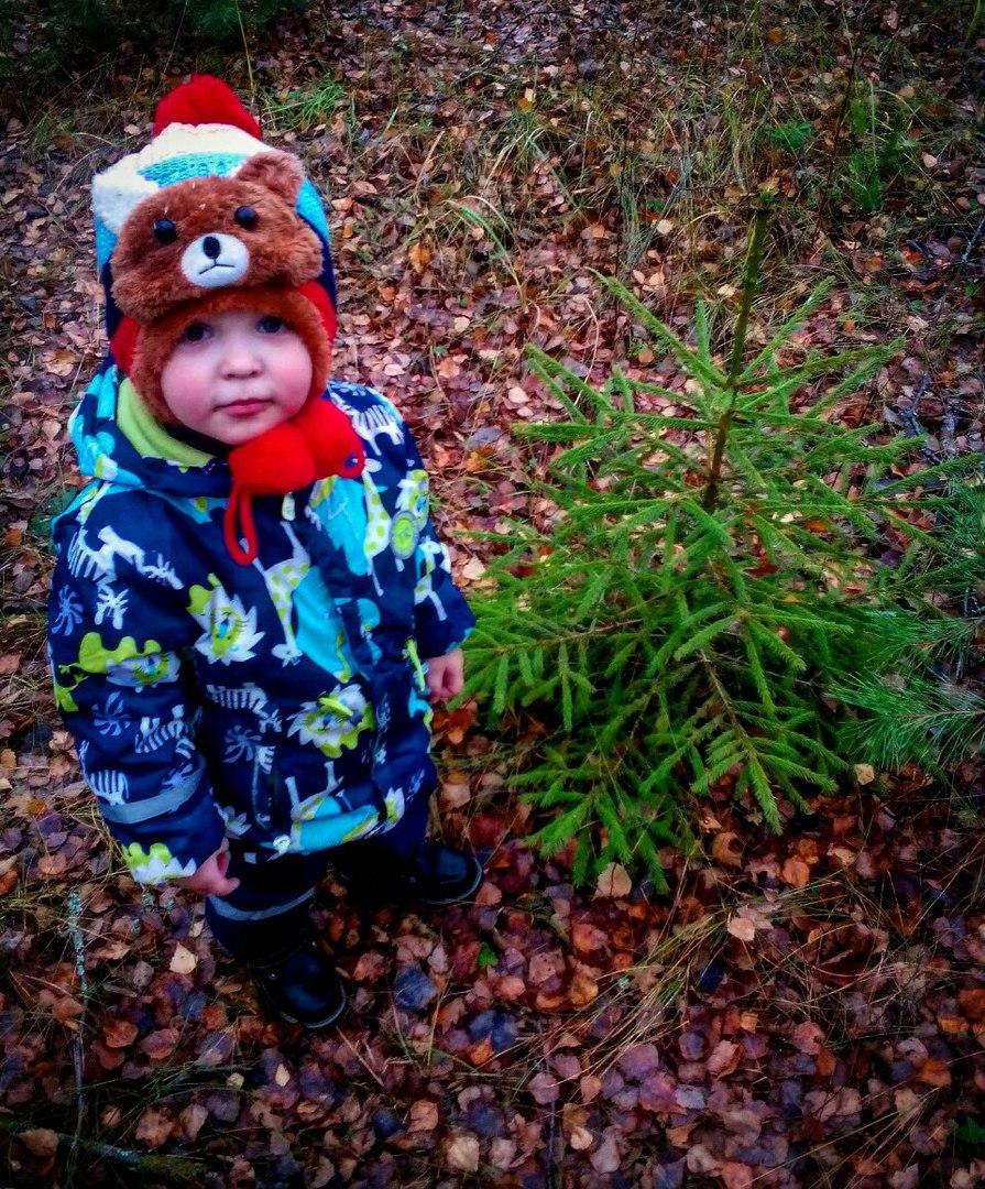 Мишка в лесу. Лапочка