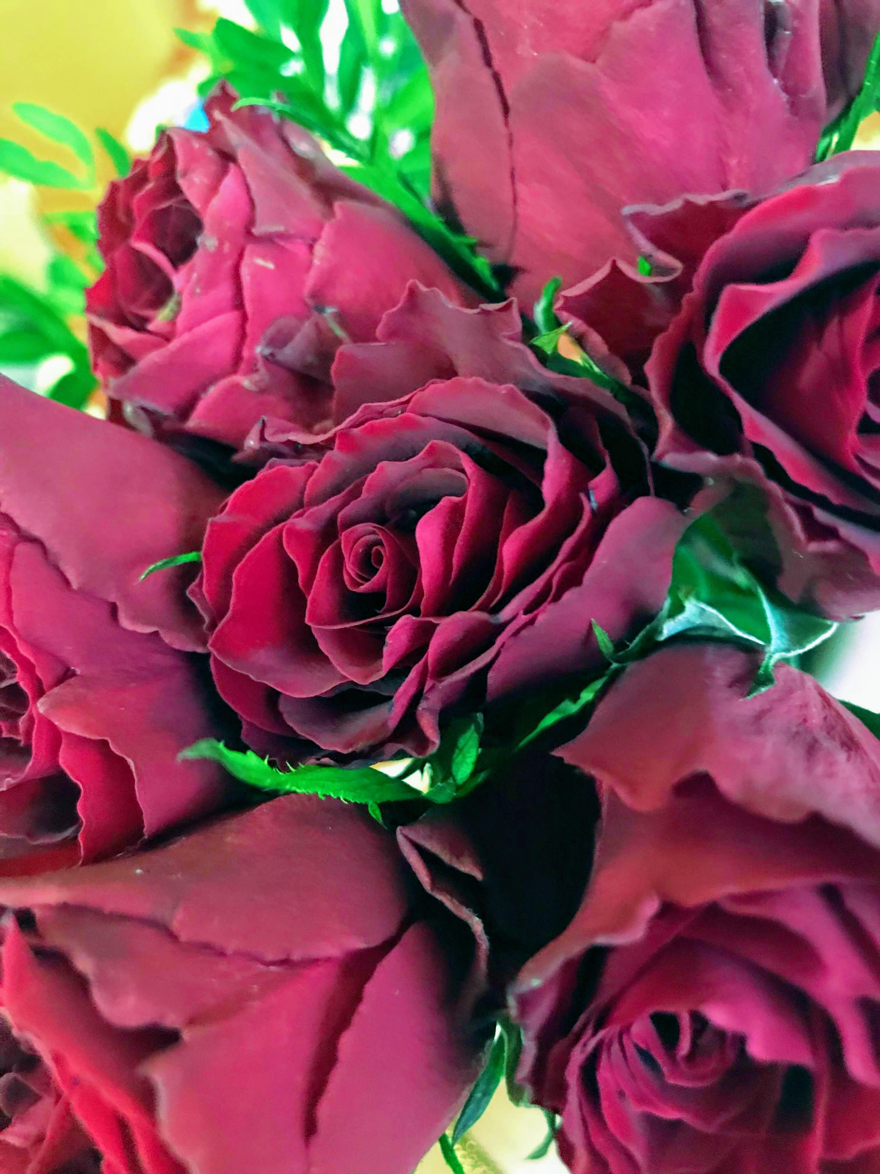 Прекрасные. Блиц: розы