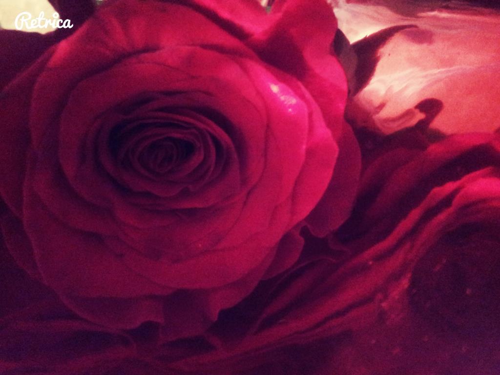 Красота в малом. Блиц: розы