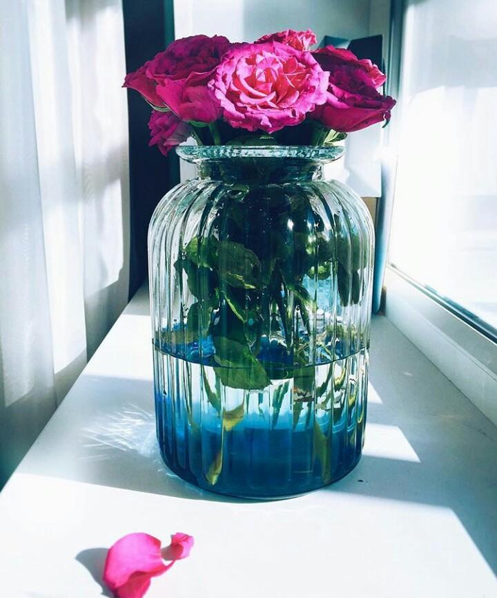 Розы в банке. Блиц: розы