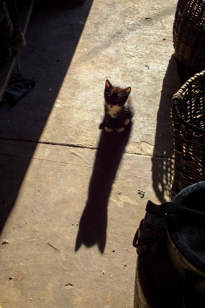 Большая тень маленького котёнка. Блиц: тени