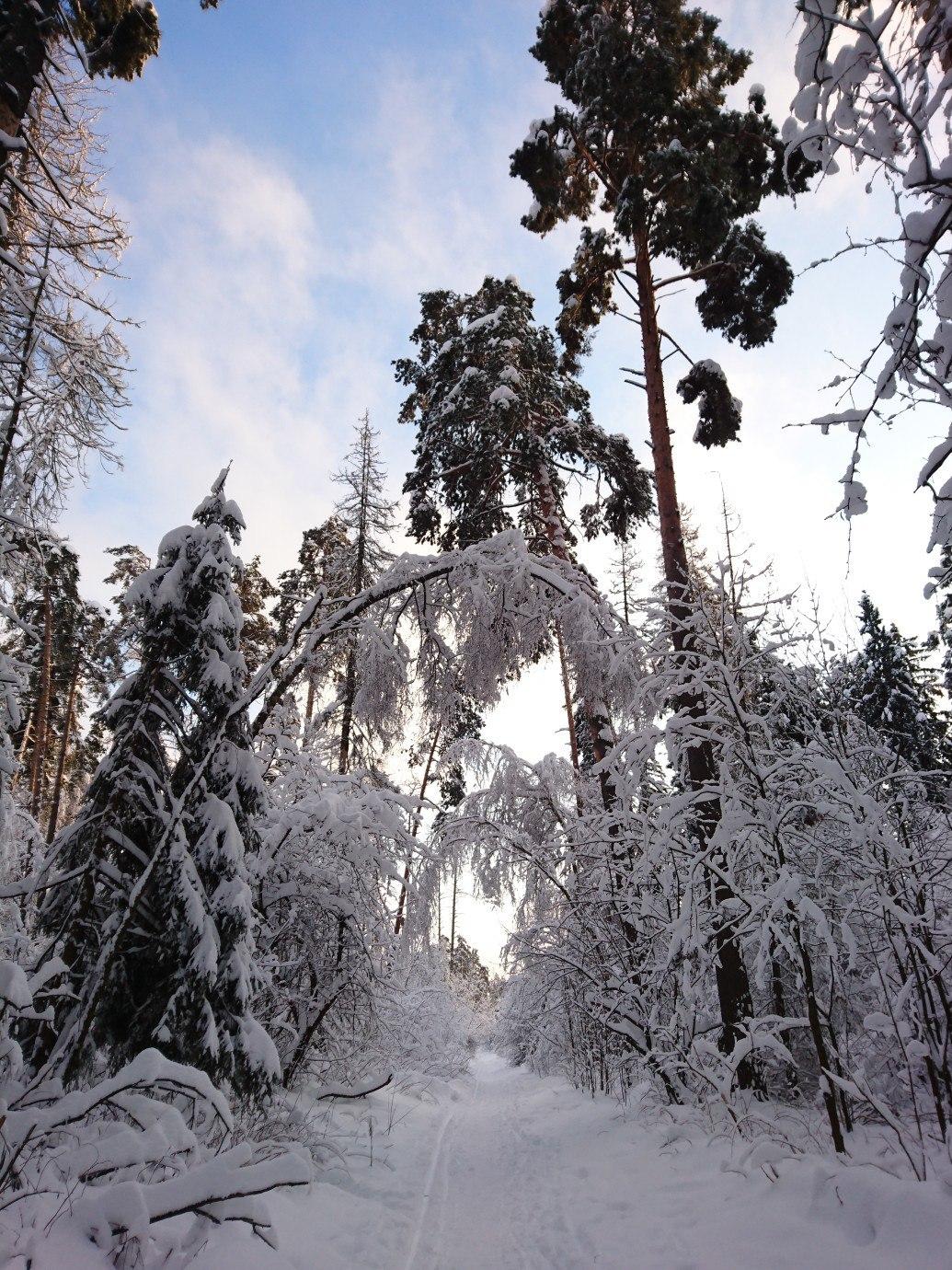 Зимний лес. Блиц: здравствуй, зима!