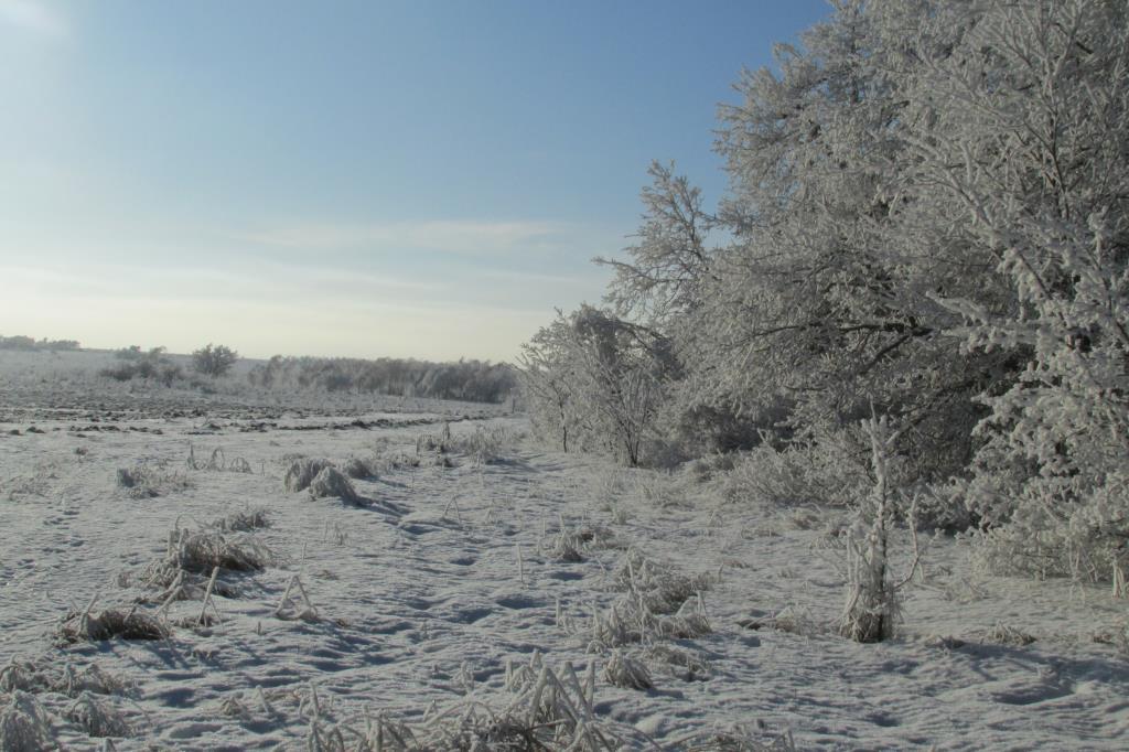 мороз и солнце.... Блиц: здравствуй, зима!