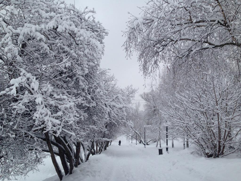 Ранним утром в парке. Блиц: здравствуй, зима!