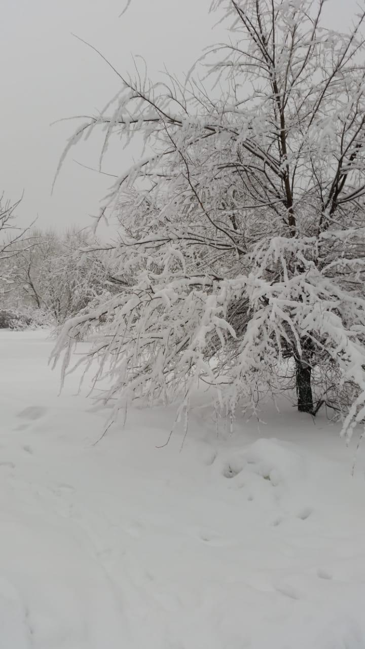 Зимняя снежность . Блиц: здравствуй, зима!