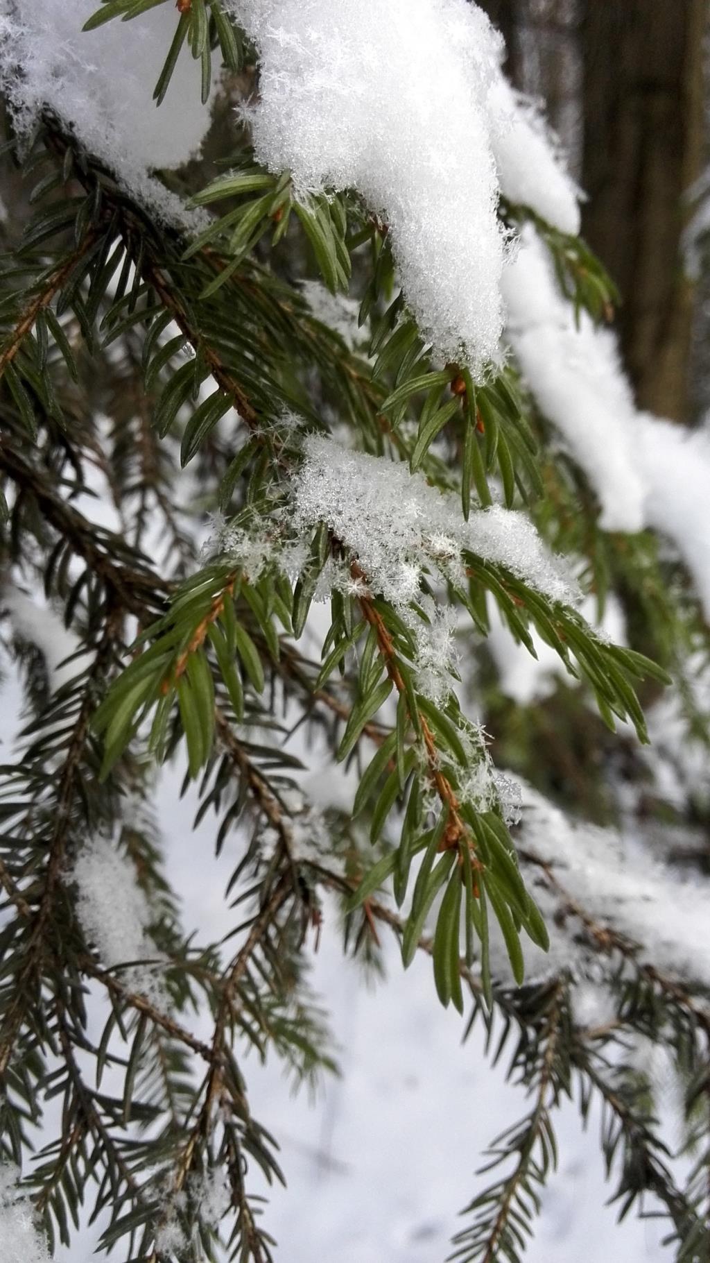 Вселенная снежинок. Блиц: здравствуй, зима!