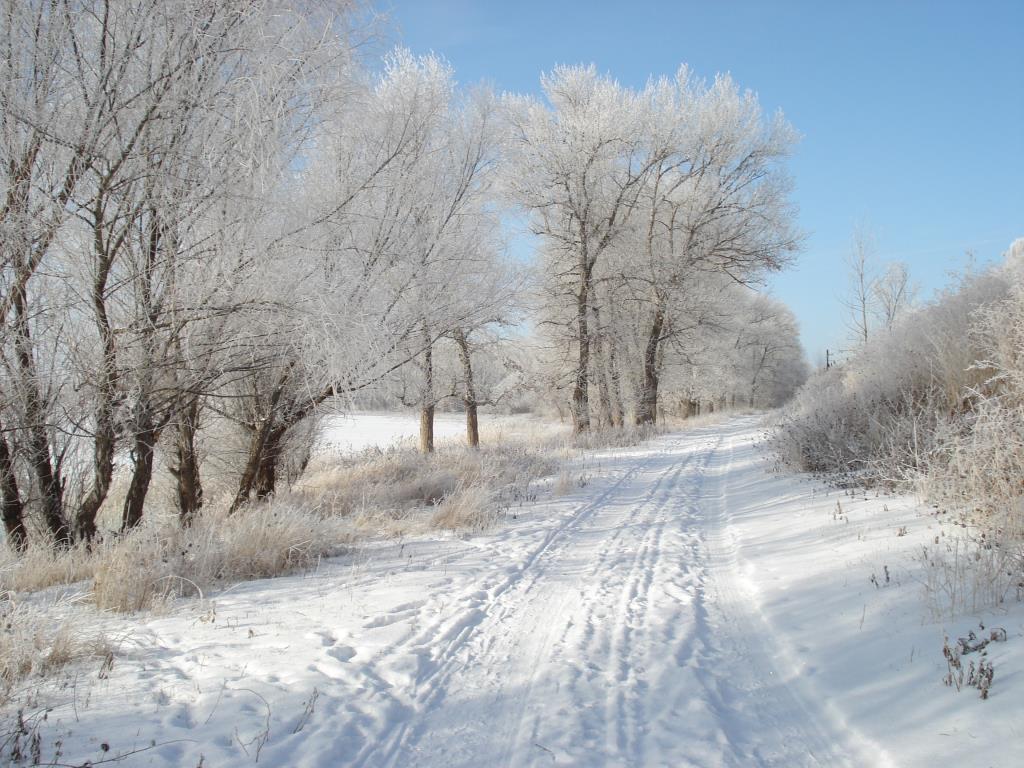 Снежная дорога. Блиц: здравствуй, зима!