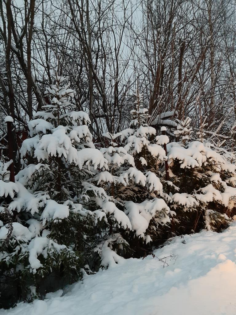 Зимушка. Блиц: здравствуй, зима!