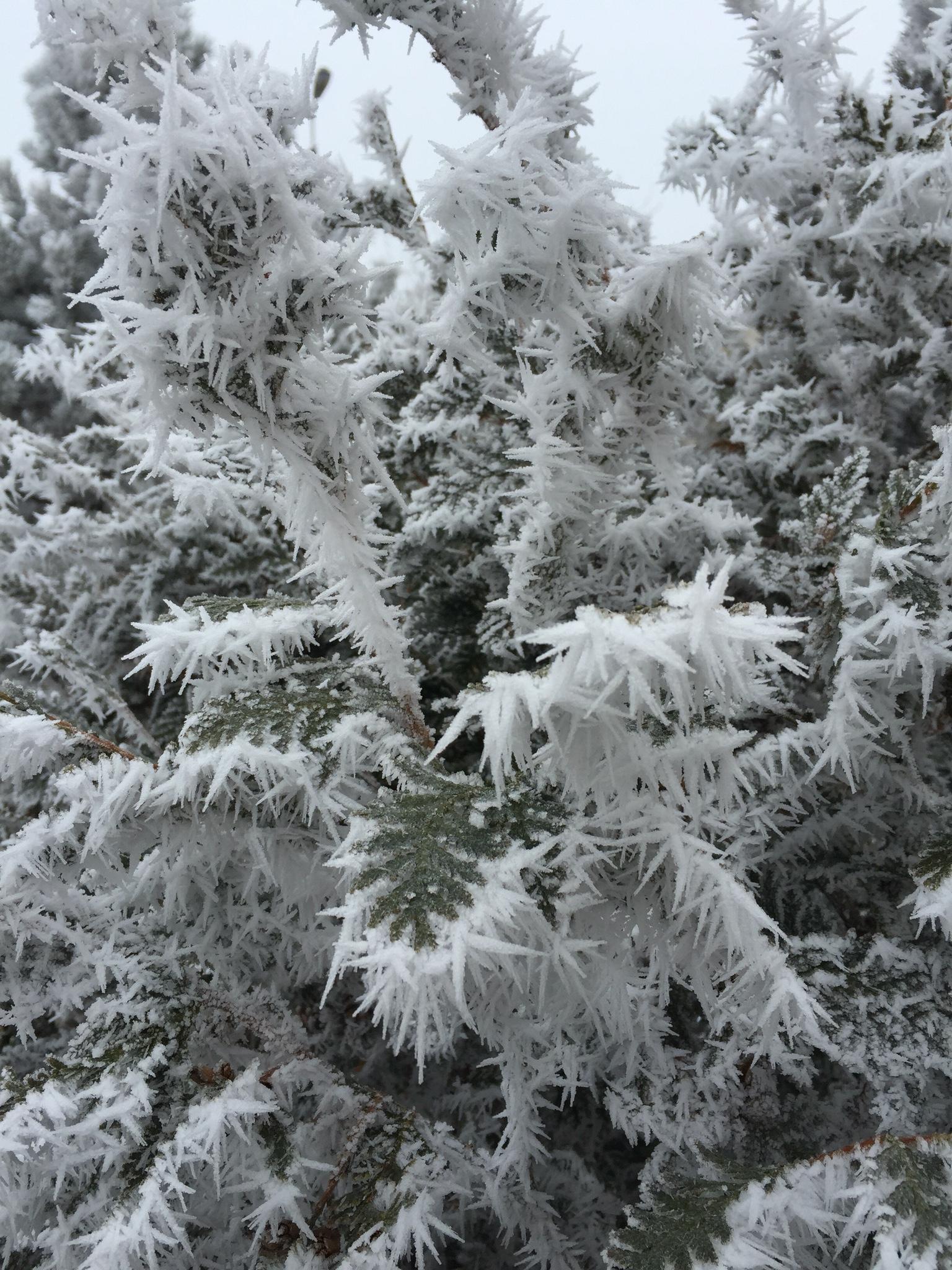 Ледяные оковы. Блиц: здравствуй, зима!