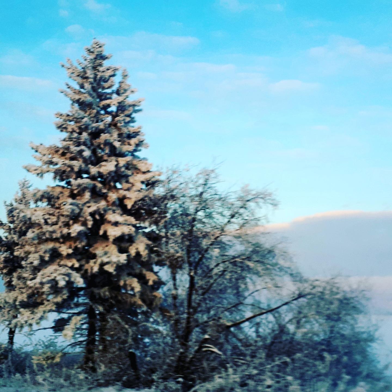 Зима,мороз.. Блиц: здравствуй, зима!