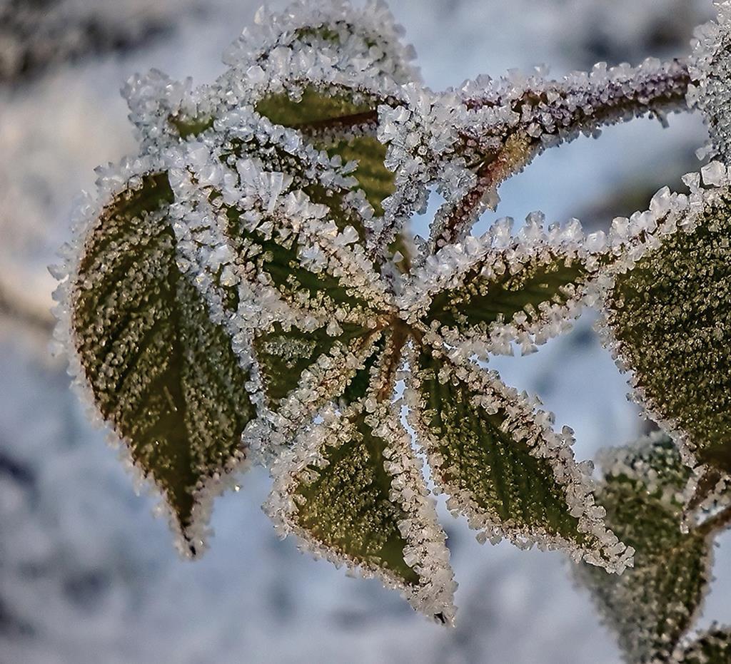 хрустальные листья. Блиц: здравствуй, зима!
