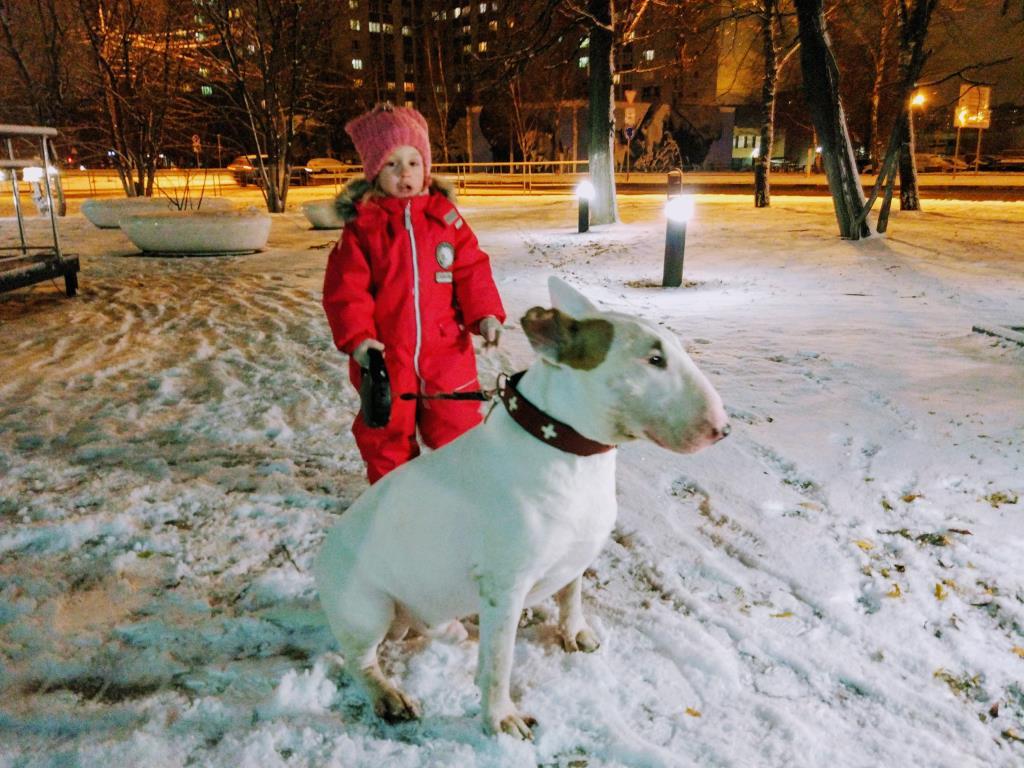 Вечерние прогулки с другом. Веселая зима