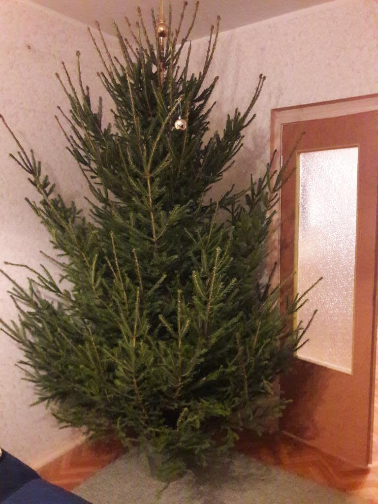 Елка приехала. Блиц: Ну и елка!