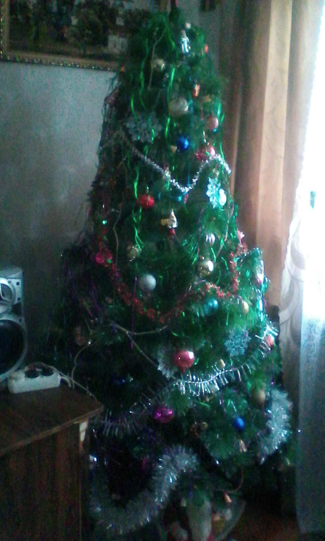 Наша новогодняя красавица. Блиц: Ну и елка!