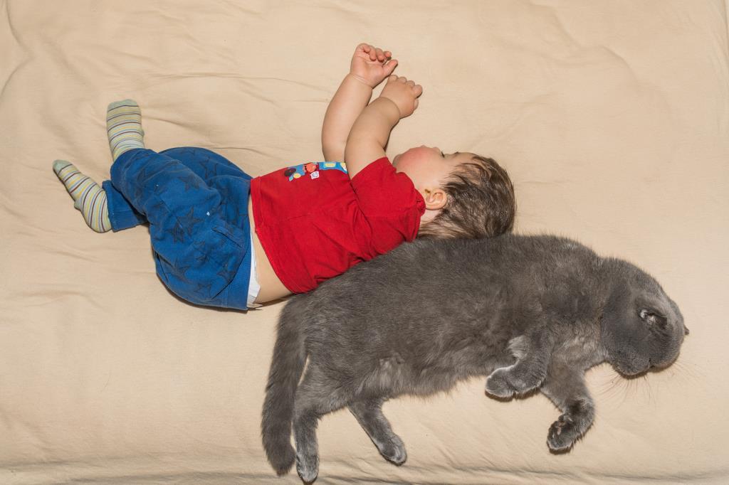 Сладкий сон - спина к спине.. Спокойной ночи! Кто спит слаще всего?