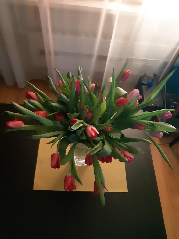 Тюльпаны. Блиц: весенние цветы