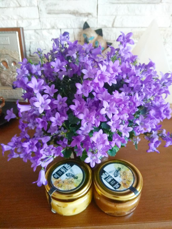 Колокольчики весенние.. Блиц: весенние цветы