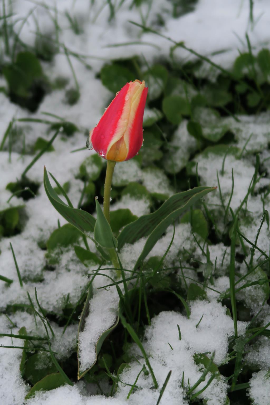 Весна приходи!!!. Блиц: весенние цветы