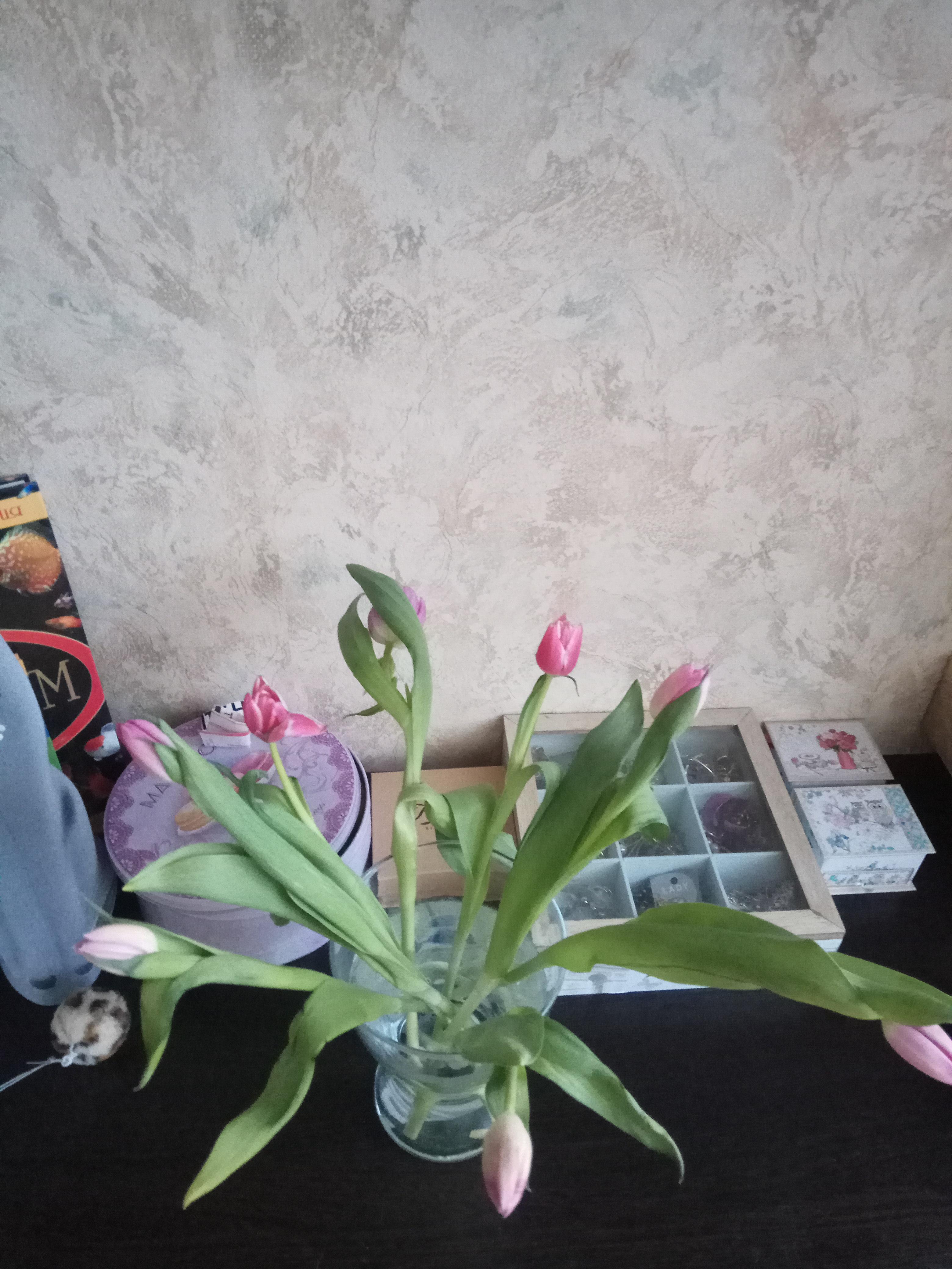 Весна, весна! Цветы, цветы!. Блиц: весенние цветы