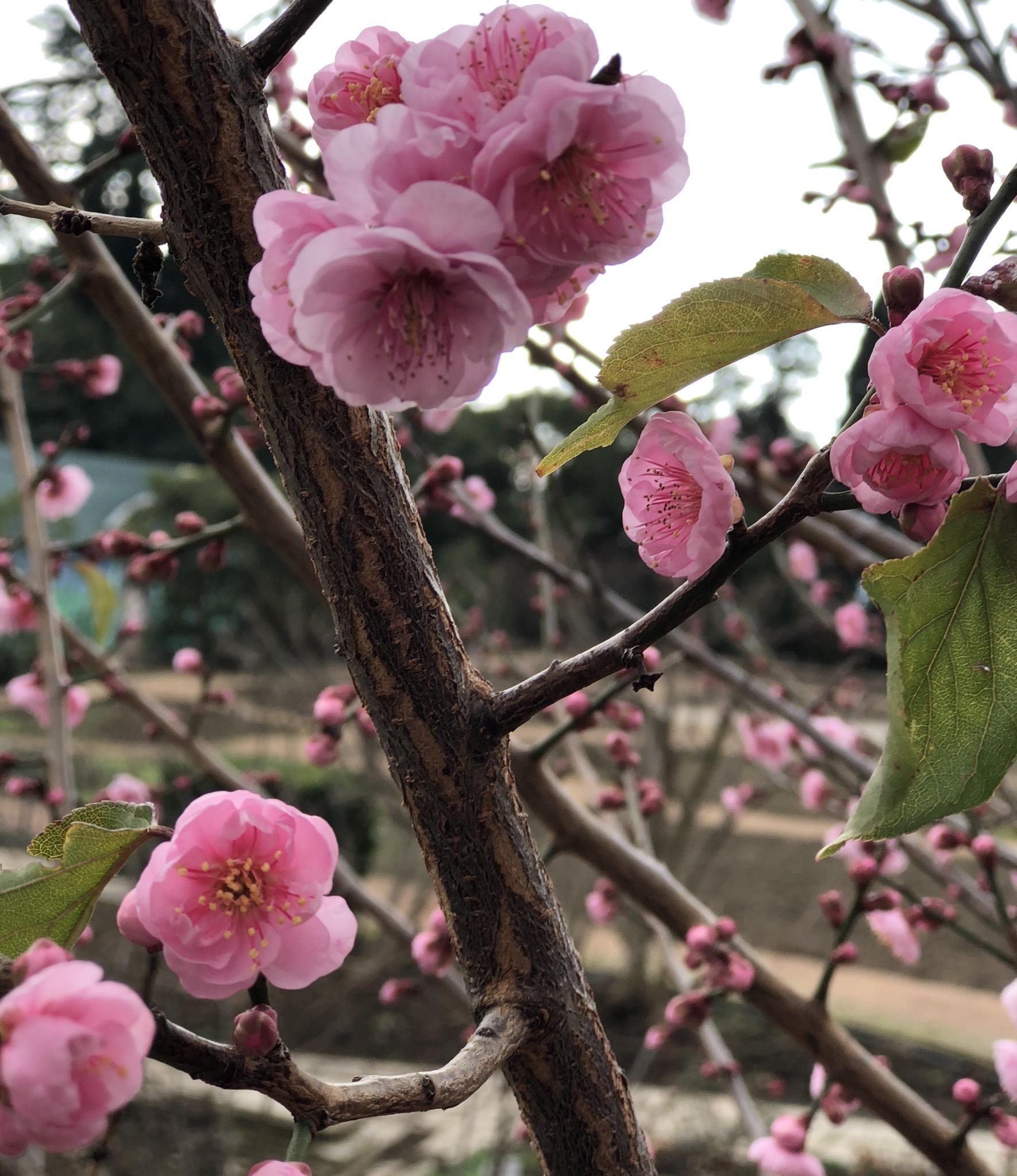 Нежное цветение. Блиц: весенние цветы