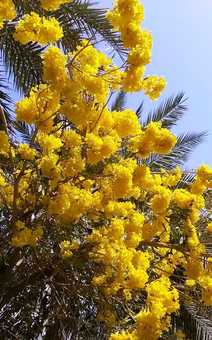 Весенние красоты востока!. Блиц: весенние цветы