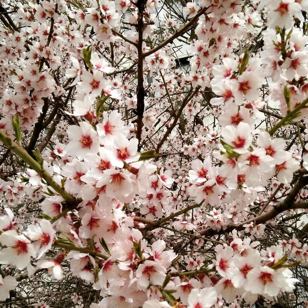 Когда яблони цветут.... Блиц: весенние цветы