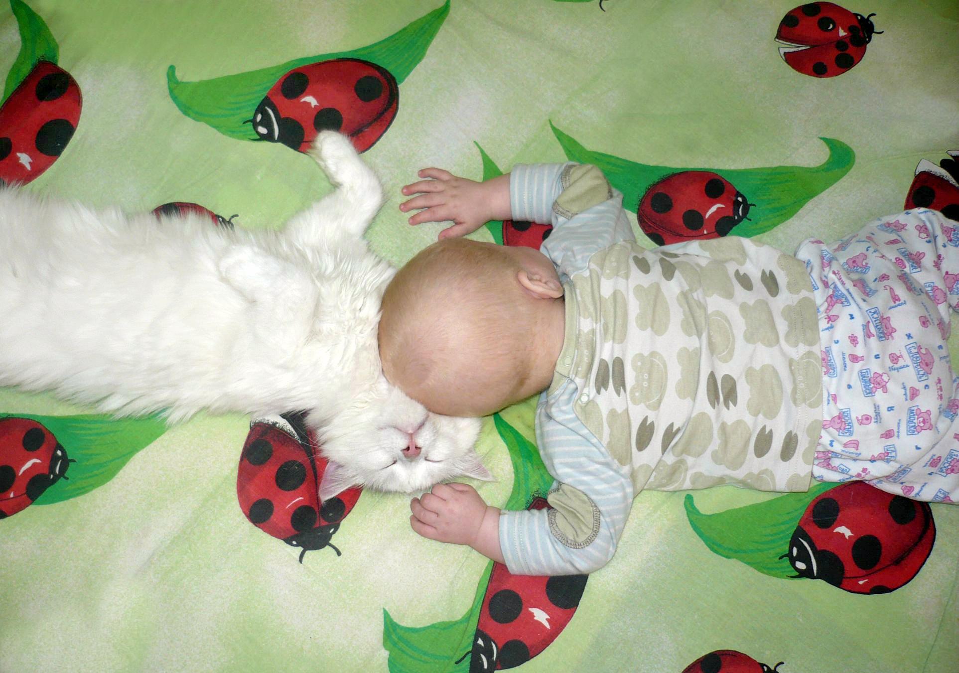 Спят ребята, спят котята!. Спокойной ночи! Кто спит слаще всего?