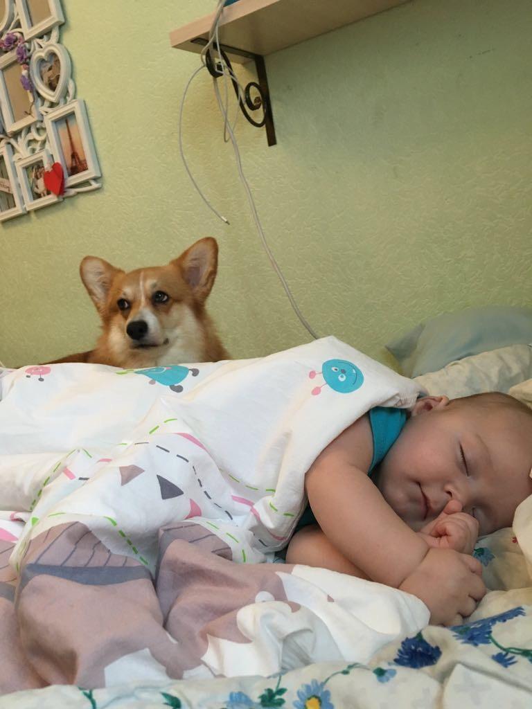 Сон под надежной охраной . Спокойной ночи! Кто спит слаще всего?