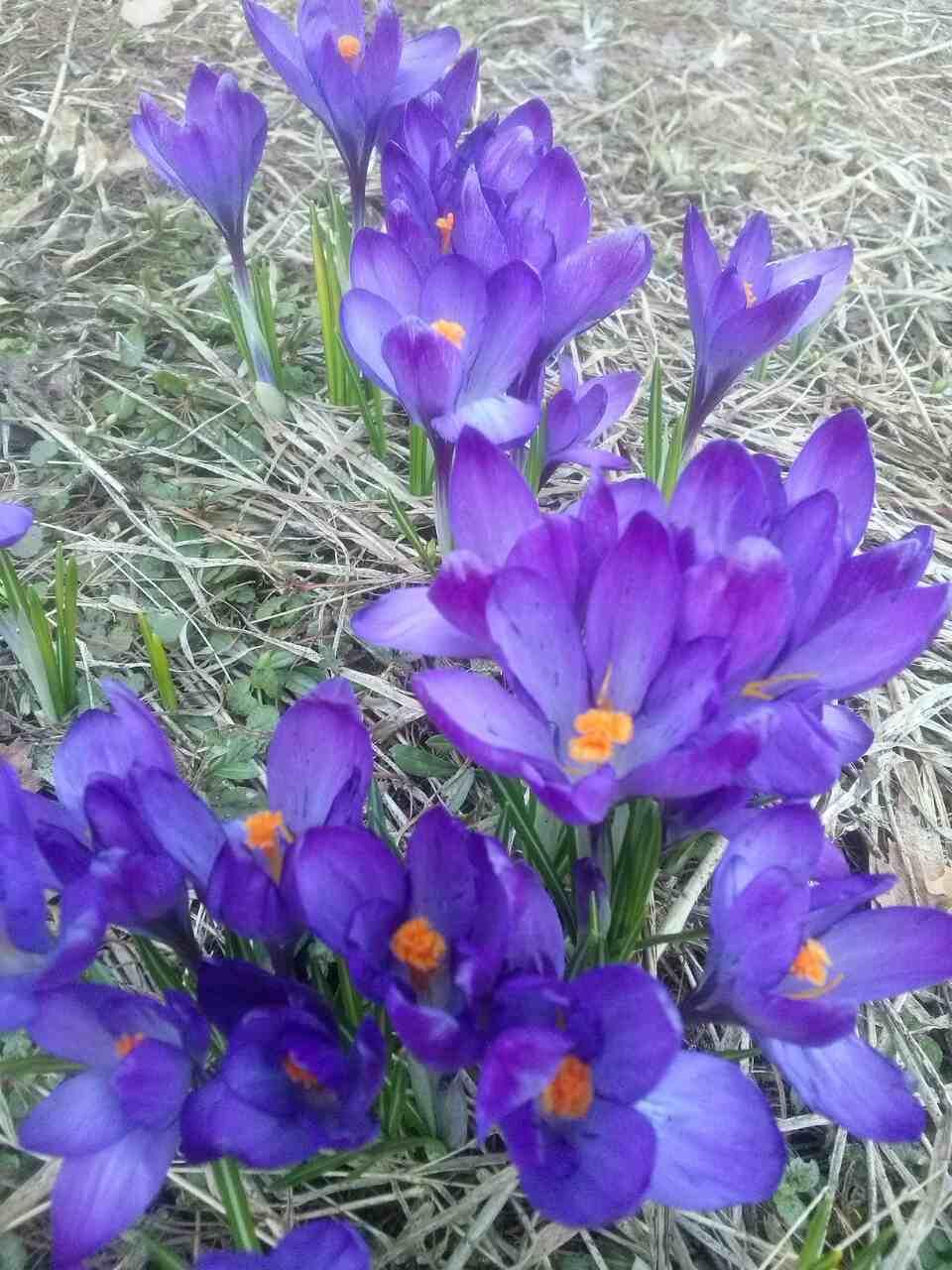 Первый весенний букет!). Блиц: весна идет!