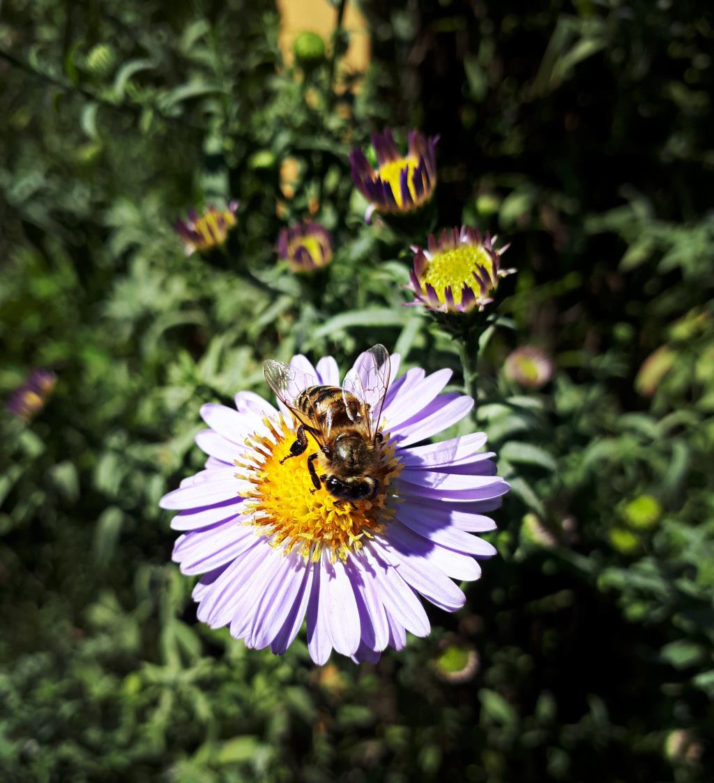 Приветик, от пчелки!. Блиц: весна идет!