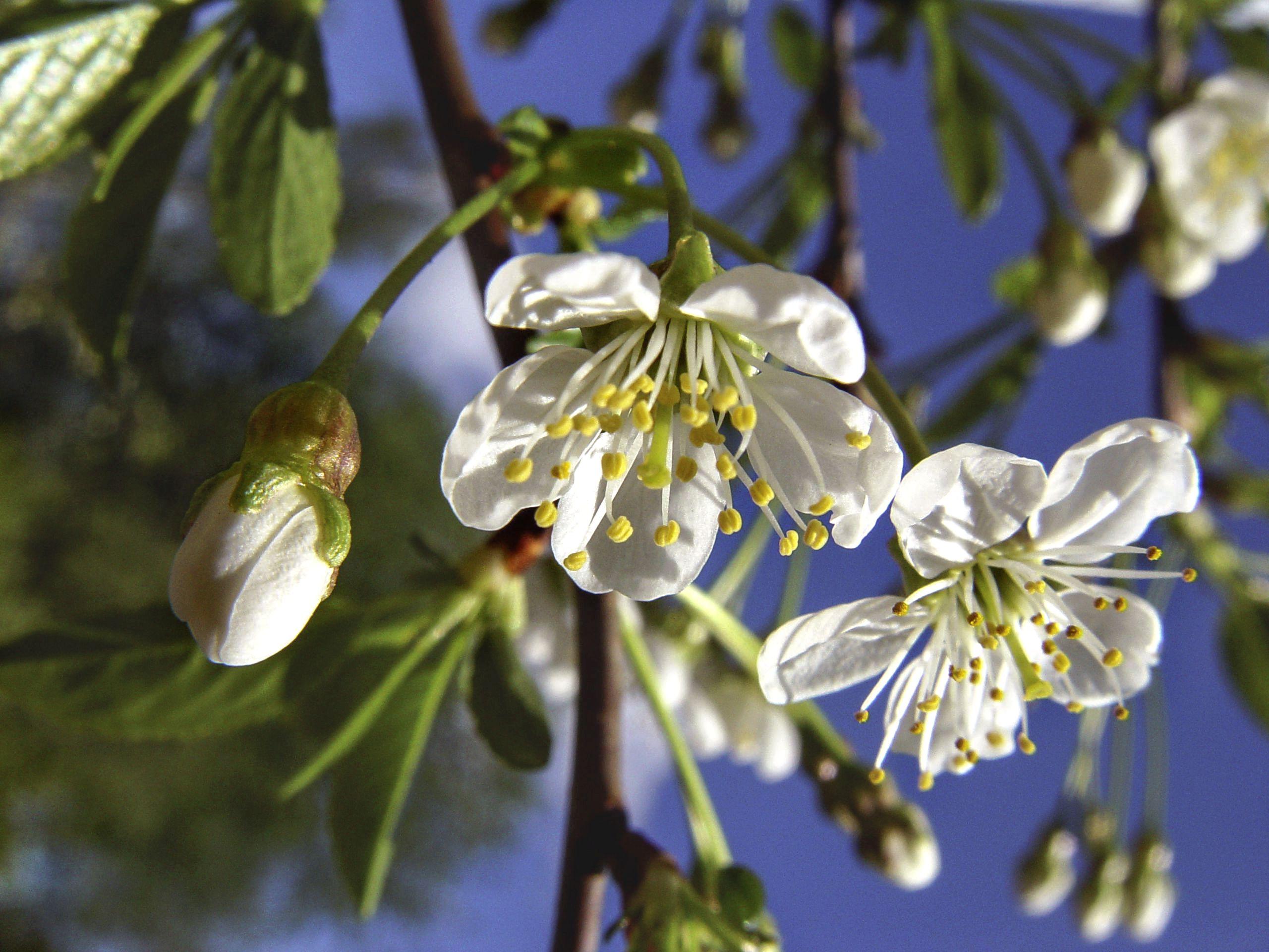 Цветение. Блиц: весна идет!