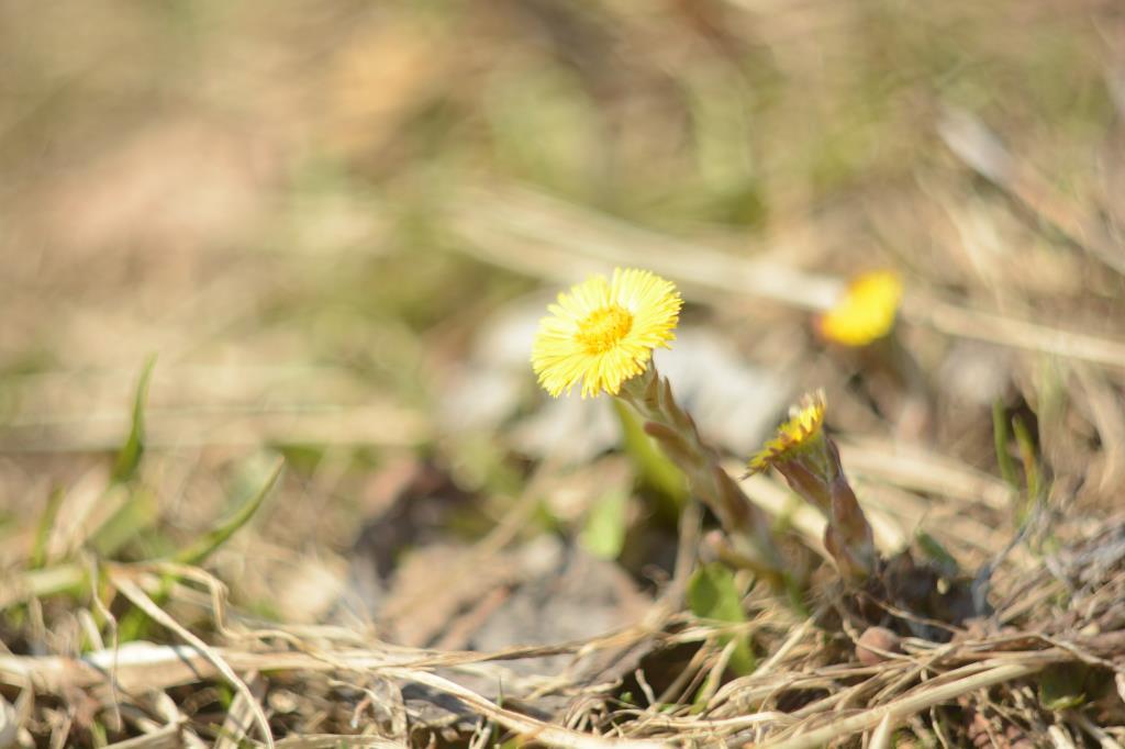 Навстречу солнцу.... Блиц: весна идет!