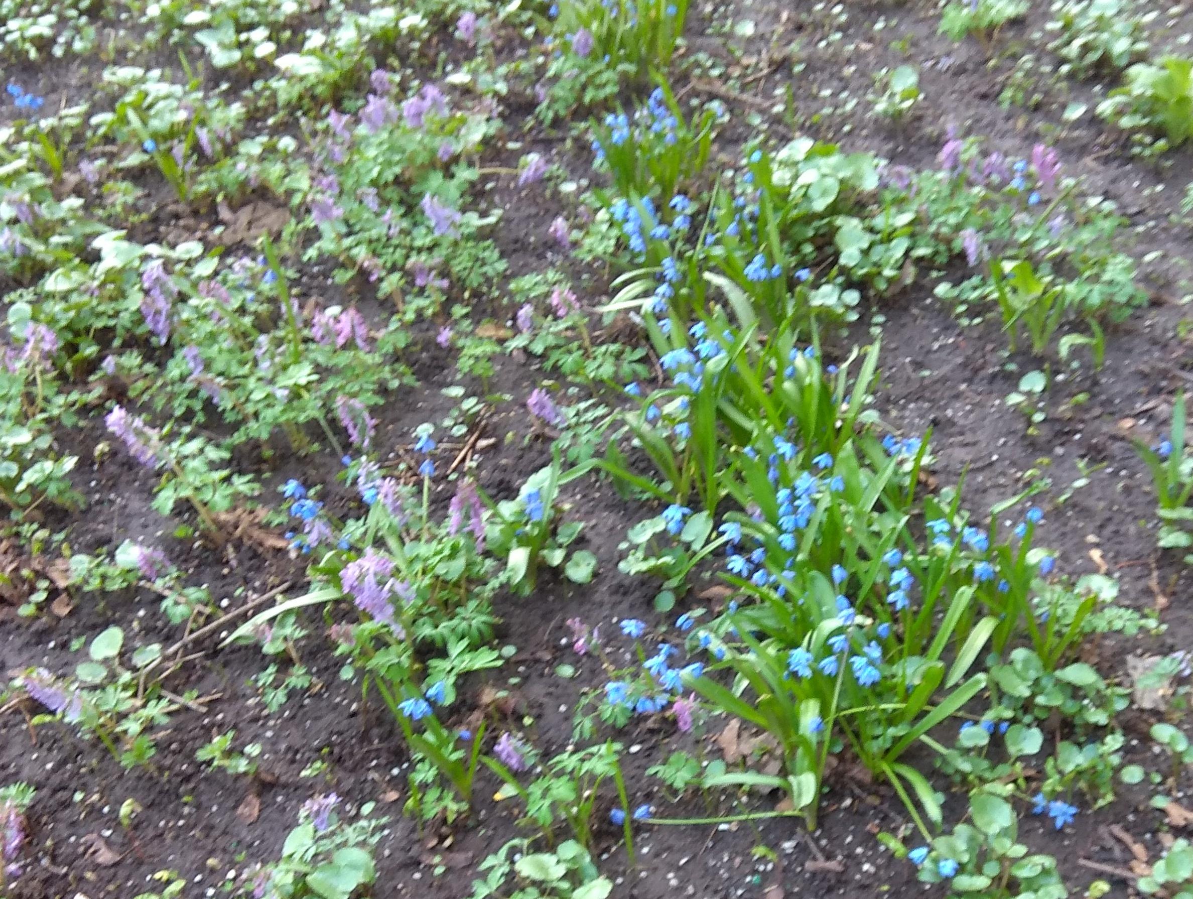 Первые цветы двора. Блиц: весна идет!